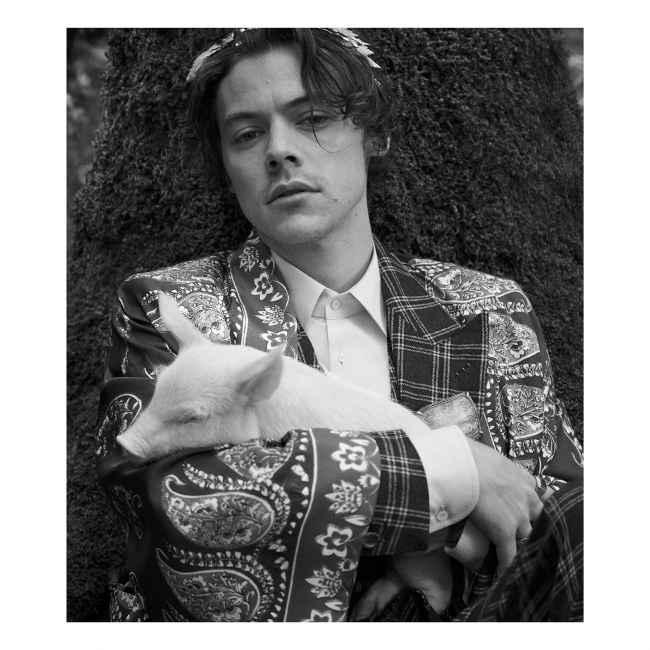 Harry Styles en campaña de Gucci