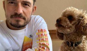 Orlando Bloom confirma que su perrito ha muerto